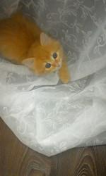 Милые котята,  в дар!